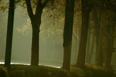 Boulevard des brumes - Boulevard of mists (p.franche Occupé - Buzzy) Tags: automne brume matin lumière boulevard ombres arbres ville octobre autumn mist morning light shadows trees city october