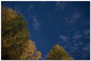 backyard sky