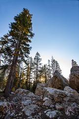 BareIslandLakeTrees9Sept1-18 (divindk) Tags: bareislandlake california maderacounty sierranationalforest backpacking camping lake quiet reflection serene sunrays sunset sunshine treetop trees