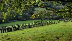 Old Corris stone fence (PentlandPirate of the North) Tags: hff fence happy friday slate railway wales corris shards boundary wall garneddwen