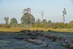 _IMG2468 (Henk de Regt) Tags: the netherlands gelderland natuur nature landscape grass bos forest trees zonsopkomst sunset sundown zonsondergang swamp nederland veluwe landschap gras water bomen moeras