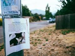 I am Missing (La Chachalaca Fotografía) Tags: missing lost cat gato chat perdido perdu absent oregon lumix gx8