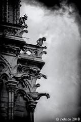 On The Lookout (orgazmo) Tags: paris france notredame notredamedeparis cathedrals churches olympus omd em1mk2 micro43s m43s mzuiko12100mmf4ispro gargoyles acrhitecturaldetails monochrome blackwhite historical