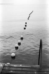 Som perler på en snor (holtelars) Tags: asahi pentax spotmatic spotmaticii spii m42 supertakumar takumar 50mm f14 film 35mm analog analogue ilford fp4 ilfordfp4 100iso d76 bw blackandwhite monochrome filmphotography filmforever ishootfilm larsholte homeprocessing jobo atl1500 nivå denmark danmark havn marina water sea seascape