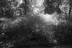Sunlight in Van Cortlandt Park (Zach K) Tags: sunlight van cortlandt park vancortlandt nycparks parks natural area trail hiking putnam putnamtrail nyc bronx thebronx summer day afternoon walk stroll peaceful wooded trees sun bright glimmer glisten fujifilm fuji xt2 23mm 23mmf2 xf23mmf2 xf23mm20