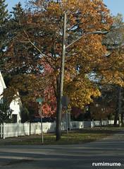 Autumn Leaves (rumimume) Tags: potd rumimume 2017 niagara ontario canada photo canon 80d sigma fall autumn outdoor leaf colour day brown tree 2018