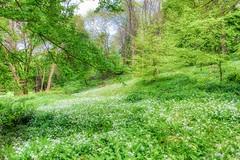 Green Overload (SammCox) Tags: aurorahdr bath england landscape priorpark somerset unitedkingdom