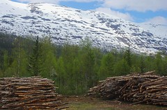 Lumber (sfryers) Tags: nordland railway forest trees wood lumber mountain ice snow norway smc pentaxfa 35mm 12