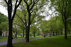 005-DSC_1199 (Lohrovi) Tags: newhaven connecticut america usa may 2018 travelling traveling city yale university commencement