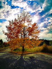 Herbstzeit (otto.detlef) Tags: herbst autumn laub leaves colorful landschaf landscape natur himmel sky baum tree wiese meadow ruine ruin huaweip20pro foto