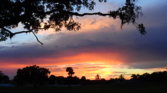 September 21st Sunset (Jim Mullhaupt) Tags: sunset sundown dusk sun evening endofday sky clouds color red gold orange pink yellow blue tree palm outdoor silhouette weather tropical exotic wallpaper landscape nikon coolpix p900 pond lake water reflection manateecounty bradenton florida jimmullhaupt cloudsstormssunsetssunrises photo flickr geographic picture pictures camera snapshot photography nikoncoolpixp900 nikonp900 coolpixp900