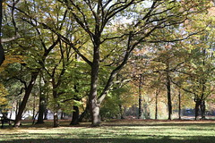 Łazienki Królewskie Park, Warsaw, Poland (LeszekZadlo) Tags: park warsaw warschau warszawa varsovie autumn fall sunlight green yellow trees nature natureza naturaleza natura paisaje landscape landschaft pejzaż przyroda jesień mazowsze mazovia