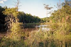 Swamp on Color Film (Neal3K) Tags: georgia kodakektar100 pikecountyga rural