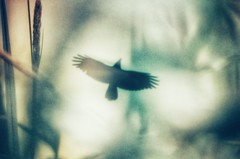 illusions (***étoile filante***) Tags: bird vogel plants pflanzen nature natur expressive poetic artful creative kreativ light licht