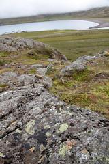 Elf Rock Lichen (peterkelly) Tags: digital canon 6d gadventures bestoficeland iceland europe borgarfjörðureystri bakkagerði álfaborg elfrock rock rocky harbour harbor water village lichen beach shore shoreline