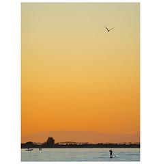 _9280226b (Concert Photography and more) Tags: 2018 july italy grado olympus em1 zuiko zuikoed70300mmf56 sunset landscape people bird sky horizon sea colors orange liveactionhero