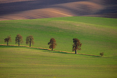 Chestnut alley (Paweł Gałka) Tags: sunset moravia landscape landschaft tree chestnut alley green brown dusk light evening