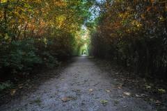 Entrance fall (alexcalver) Tags: sunset goldenhour fall autumn derbyshire canon80d