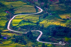 The curve (Bobby Tran 2012) Tags: curve road rice travel traditional field step laocai vietnam tourist yty