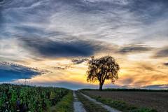 Beauty in the Sky... (Ody on the mount) Tags: abendlicht anlässe bäume em5ii fototour himmel mzuiko4518 omd olympus pflanzen schwäbischealb silhouette sonnenuntergang weg wolken bw clouds evening monochrome sunset trees ways