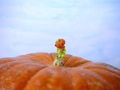 73-pumpkin-1 12mm (2) (tinyteensdolls) Tags: amigurumi amigurumidoll artdoll crochet craft crochetmini crochettoy crochetminiature crochetdoll toy tiny tinyamigurumi threadcrochet teddy miniature mini microcrochet micro minicrochet miniamigurumi pumpkin pumpkinhead handmade halloween