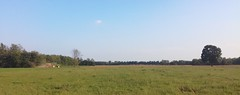 Landscape (Matt3o Gorla) Tags: landscape paesaggio colors blue sky land earth clouds countryside trattore work