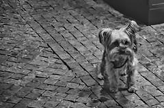 Photo (BadSoull) Tags: photo 2018 czech republic prague trip walk photowalk nikon d5100 dslr dog animal
