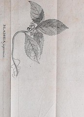 This image is taken from Page 96 of Flora Japonica : sistens plantas insvlarvm Japonicarvm secvndvm systema sexvale emendatvm : redaetas ad XX classes, ordines, genera et species : cvm differentiis specificis, synonymis pavcis, descriptionibvs concinnis e (Medical Heritage Library, Inc.) Tags: plant physiology rcplondon ukmhl medicalheritagelibrary europeanlibraries date1784 idb28039725
