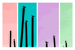A bird's paradise ( Poster Art) (samuel.t18) Tags: poster art birds paradise zoo chester perspective samuelt18 nikon d3200 zoom telephoto 55300mm color pop