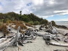 Drift Wood at Ship Creek in New Zealand (Craigs Travels) Tags: driftwood shipcreek newzealand tasmansea