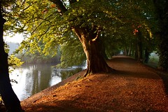 Early morning stroll (Nige H (Thanks for 20m views)) Tags: nature landscape autumn dawn earlymorning stroll path leaves lake wiltshire coatewater england