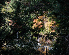 Stream_119908 (gpferd) Tags: plant tree water waterfall burney california unitedstates us