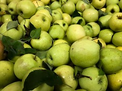 Green Apples 2 (Lux Llama Productions) Tags: barn apple picking fall natick framingham lookout farms family couple 2018 apples many plenty lot hay leaf leaves crate box peach pear plant plants maple trees tree grass grape grapes bench orange picnic red