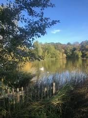 Pond life (marc.barrot) Tags: reflection serene tree grass hedge swan pond park uk nw3 london heath hampstead highgateponds shotoniphone