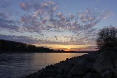 Oktobermorgen (Markus Weber) Tags: oktober sonnenaufgang rhein bonn licht wolken wasser