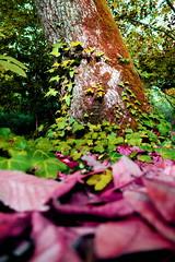 Tree & Floor (RAlmeidaPhoto) Tags: psych nature effect tree