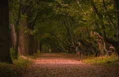 Manteling, Oostkapelle (Omroep Zeeland) Tags: bos manteling oostkapelle zeeland walcheren