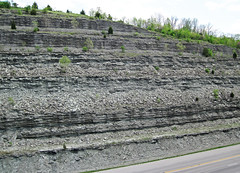 Limestone & shale (Bellevue Limestone over Fairview Formation over Kope Formation, Upper Ordovician; Maysville West roadcut, Kentucky, USA) 1
