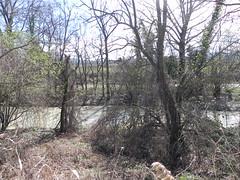 DSCN9813 (Gianluigi Roda / Photographer) Tags: springtime march 2013 creek creeks lavinocreek