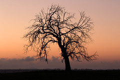 Westbrook Tree (Alan McIntosh Photography) Tags: tree nature sunrise colour silhouette lonely westbrook darling downs toowoomba landscape