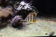 Fish (Las Cuentas) Tags: fisch aquarium fish canon eos 4000d