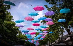 Preemptive Rain Shield (dlerps) Tags: bkk bangkok city daniellerps lerps sony sonyalpha sonyalpha99ii tha thai thailand urban lerpsphotography metropolitan chatuchak weekendmarket chatuchakmarket umbrella umbrellas colours colors hanging carlzeissplanar50mmf14ssm planart1450 carlzeiss asia