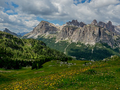 In the Dolomites #55 (andertho) Tags: dolomites dolomiti italy italia mountains flowers olympus omd em1ii m43 microfourthirds