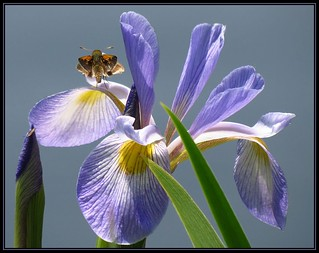 IMG_3002 Hanging Out with Iris 5-26-16