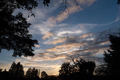 DSCF0679 (jojotaikoyaro) Tags: zenpukuji suginami tokyo japan landscape nature fujifilm x100f sunset