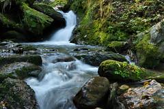 Sillschlucht - Innsbruck, Tirol (Ernst_P.) Tags: aut innsbruck sillschlucht tirol sigma 50mm f14 art österreich austria autriche tyrol bach wasser agua aqua water bosque wood forest moos moss