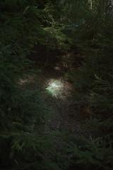La luce nel bosco (Silvia Kuro) Tags: wood woods bosco light luce sunlight sun sole trees tree alberi forest foresta film photography 35mm analog analogico portra magic magico fairytale fiaba fantasy elves elf fairy green