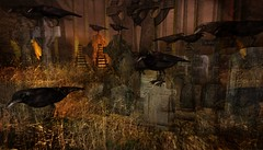 In the Plague Times the Crows Grew Fat and Glossy (tralala.loordes) Tags: drd deathrowdesigns headstones graveyard stones gravemarkers septembergroupgift secondlife drdblogging meshcreations designbyeowyn tralalaloordes plague blackdeath crows plaguetimes