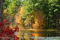 Autumn Colors 2018 - 29 (Stan S. Gallery) Tags: autumn fall fallcolors colors water waterscape wet landscape reflections wetreflections woods forest pond trees tree foliage october canonrebel pinetrees sunlight waterlillies