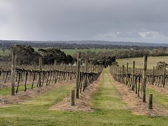 Vineyard views (koukat) Tags: mornington peninsula lunch view vineyard bodega winery vine wine vino yabby lake gum eucalyptus daytrip melbourne australia viaje viajero food comida